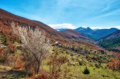 Windy Road nelle alpi albanesi Immagine Stock