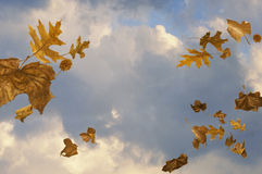 Windy sky with leaves blowing Royalty Free Stock Photos