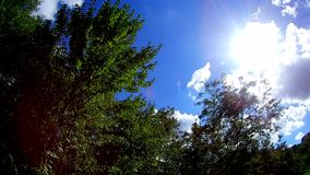 Windy sky with tree. Sun sky clouds trees stock video footage