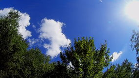 Windy sky with tree. Sun sky clouds trees stock footage