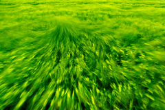 Windy storm. Stormy field in strong wind Stock Photos