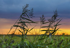 Windy sunset in the field Stock Photography