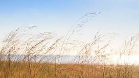 Windy Thin High Grass Palms on Beach Blue Sky Azure Sea. Panorama of thin high grass and palms on beach against blue sky and azure sea windy stock video