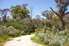 Windy Trail. Through the lush bushland at Bold Park nature reserve under a blue sky in City Beach, Western Australia Stock Image