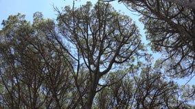 Windy Tree Branches And Sky video estoque