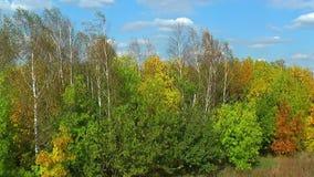 Windy trees in autumn stock video
