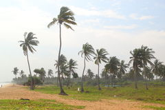 Windy tropical beach. Palm trees at a tropical beach at windy weather (Sri Lanka, NIlaveli beach Royalty Free Stock Image