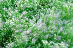 Windy Wave of Flowers. Flowers waving in the summer wind Royalty Free Stock Image