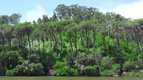 Windy Weather And Forest Plants banque de vidéos