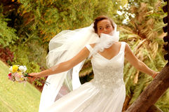 Windy wedding Royalty Free Stock Images