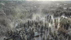 Windy white winter trees in forest. Snowy winter forest with white beautiful trees in the deep faraway stock video footage