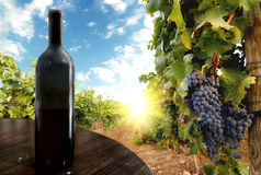 Wine. Bottle against a vineyard Royalty Free Stock Photos