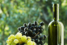 Wine. And grape in garden Royalty Free Stock Images