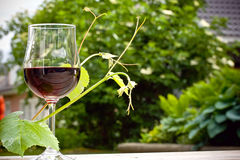 Wine. A glass of wine in a summer garden Stock Image