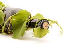 Wine. Bottle of wine studio isolated Royalty Free Stock Photography