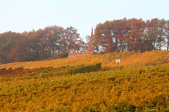 Wine agriculture in Rhine-Hesse Royalty Free Stock Photography