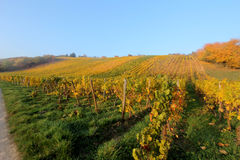 Wine agriculture in Rhine-Hesse Stock Photo