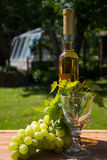 Wine. Is an alcoholic beverage made from fermented grapes or other fruits. The natural chemical balance of grapes lets them ferment without the addition of Stock Photo