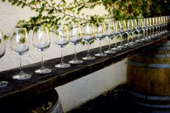 Wine for All. Set of wineglasses in a row at a local cellar stock photo