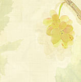 Wine background Royalty Free Stock Photo