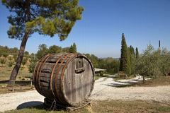 Wine barrel. Old wine barrel used as a decoration on the way to villa. Tuscany, Italy royalty free stock images