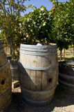 A wine barrel. At the winery Royalty Free Stock Photography