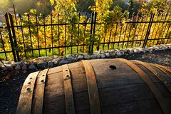 Wine barrel. Old wooden wine barrel in the vineyard, barrel in the autumn vineyard Royalty Free Stock Photography