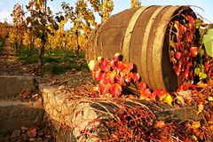 Wine barrel Royalty Free Stock Photography