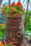 Wine barrel, used as a pedestal. For a geranium flower vase stock images