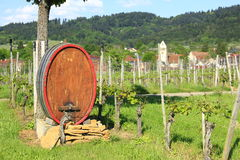 Wine barrel in the vineyard Stock Photo
