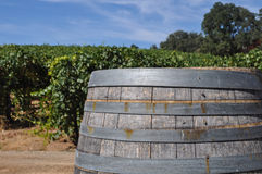 Wine Barrel and Vineyard Stock Photography