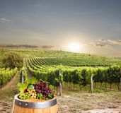 Wine with barrel stock photos