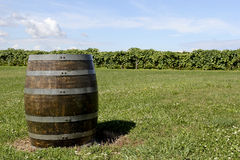 Wine barrel. Wooden wine barrel on a green lawn with a vineyard in the background royalty free stock images