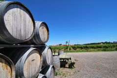 Wine Barrels. Stacked wooden wine barrels with vineyard in the background Royalty Free Stock Photo