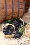 Wine barrels and baskets of grapes Royalty Free Stock Photography