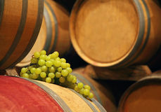 Wine barrels in cellar Stock Images
