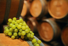 Wine barrels with grape Stock Photography