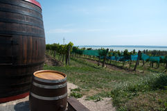 Wine barrels next to the vineyard Royalty Free Stock Image