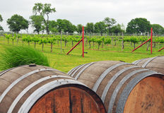 Wine Barrels at the rural Vineyard Stock Image