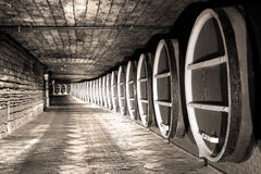 Wine barrels stock Stock Photography