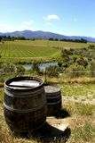 Wine barrels on a stunning Nelson vinyard Stock Photo