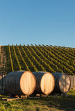 Wine barrels in vineyard with copy space Royalty Free Stock Photography