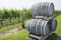 Wine Barrels in a Vineyard Stock Photo