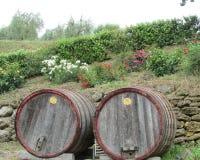 Wine barrels at winery Stock Photo