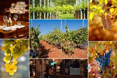 Wine.Beautiful Grapes Collage Stock Photography