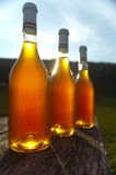Wine bottle. In sunshine on the table Royalty Free Stock Photos