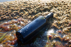 Wine in the bottle. Royalty Free Stock Photography