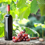 Wine bottle and bunch of grapes. Red wine bottle and bunch of grapes on old wooden table against vineyard in summer Stock Photo