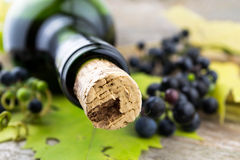 Wine bottle and bunch of grapes Royalty Free Stock Photo
