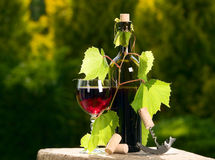 Wine bottle with currant leaves around Stock Images